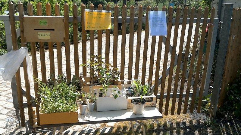 Pflanzen-Stand