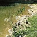 57)Bepflanz.Uferzone