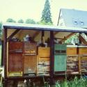Bienenstand 1992