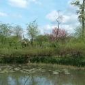 Wehrgraben/Teich