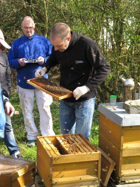 Sind unsere Bienen am Thurner Hof vielleicht krank?