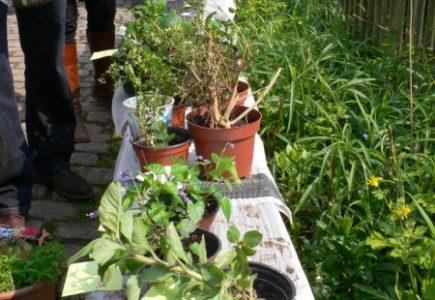 Pflanzentauschbörse vom 3.5. abgesagt