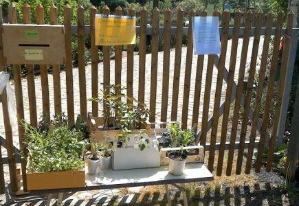 Biogarten gibt Pflanzen ab