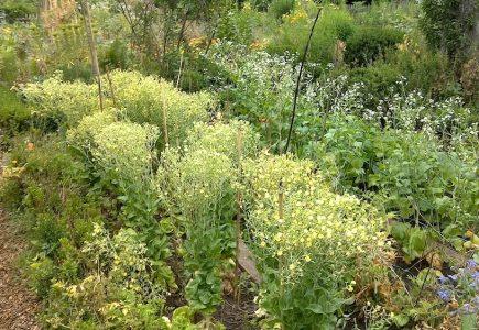 VHS Kurs: Eigenes Saatgut im Garten gewinnen – alte Gemüsesorten im Aufwind