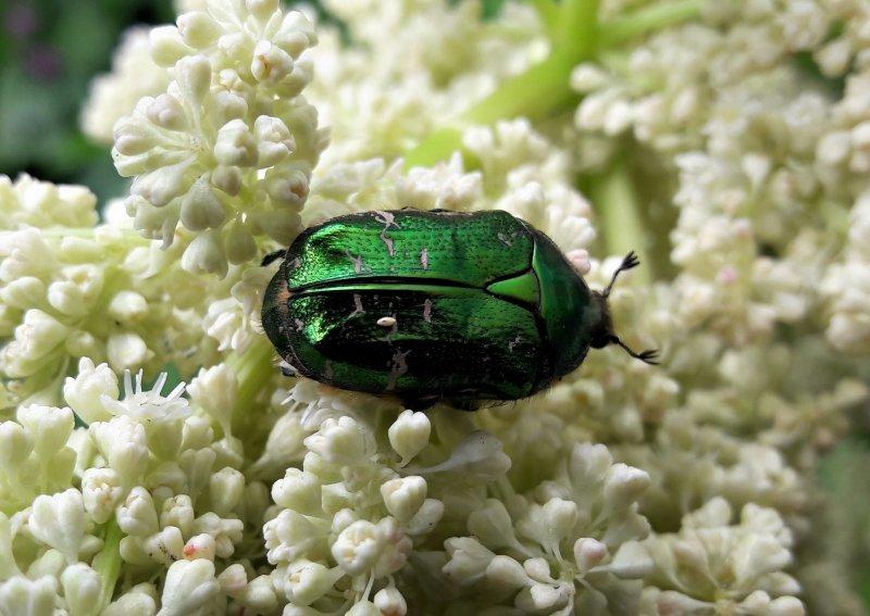 Bunte Käfer lieben altes Holz und Molche flache Tümpel